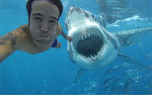 10 cilvēkam bīstamas jūras radības